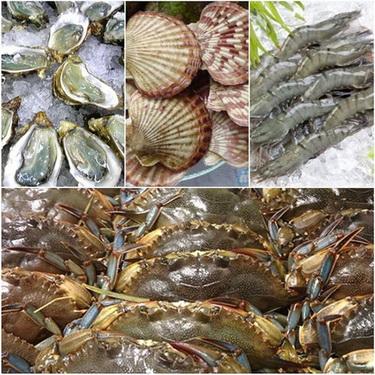 Nên chọn mua ăn hải sản tươi sống vì chúng đảm bảo giá trị dinh dưỡng ngon, bổ.